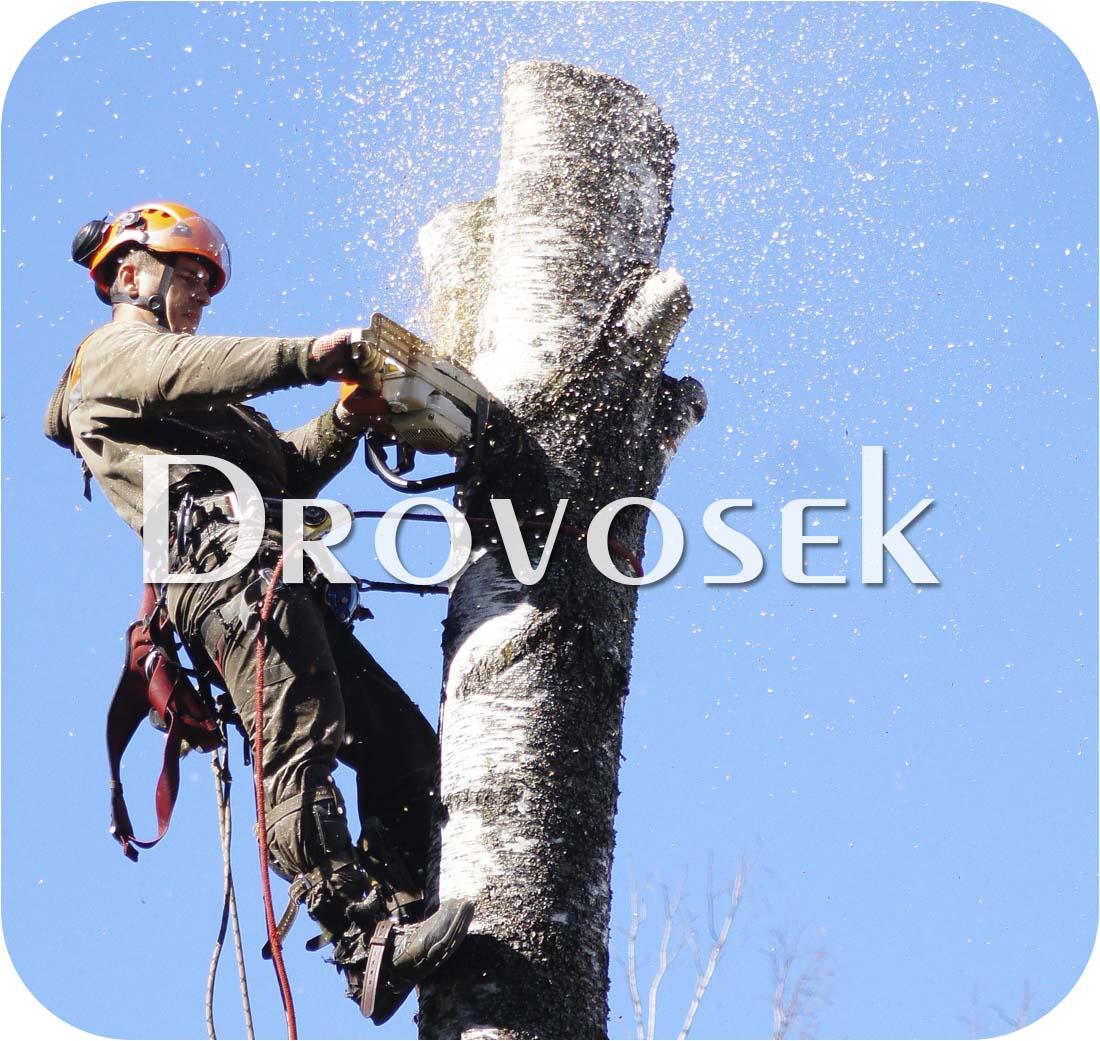 удаление деревьев в Химках