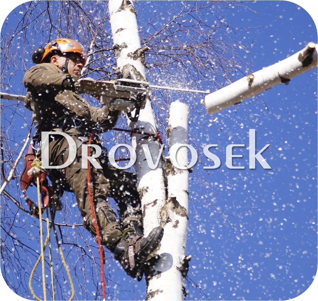 Спил деревьев в Павловском Посаде