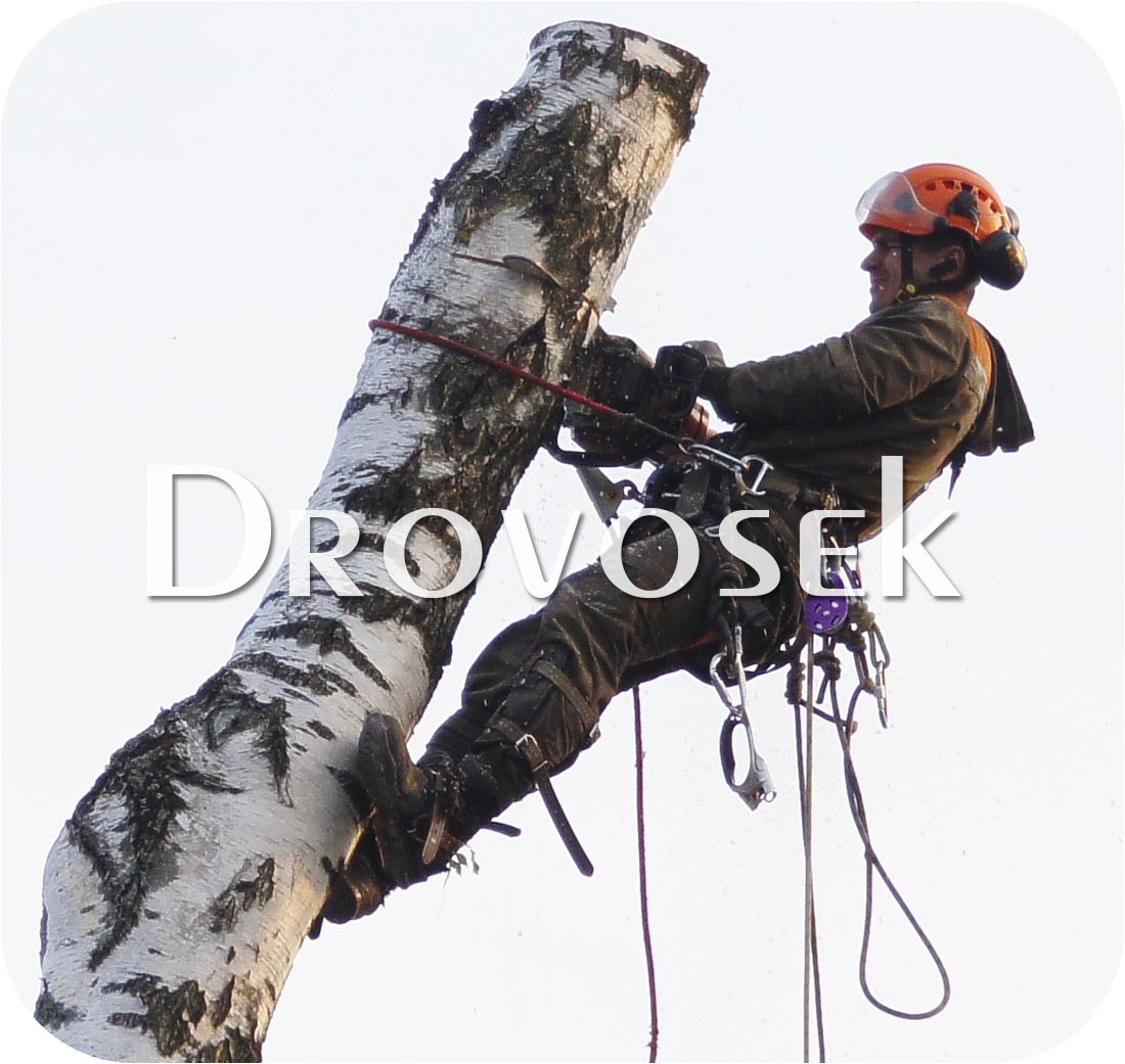 Удаление деревьев в Подольске