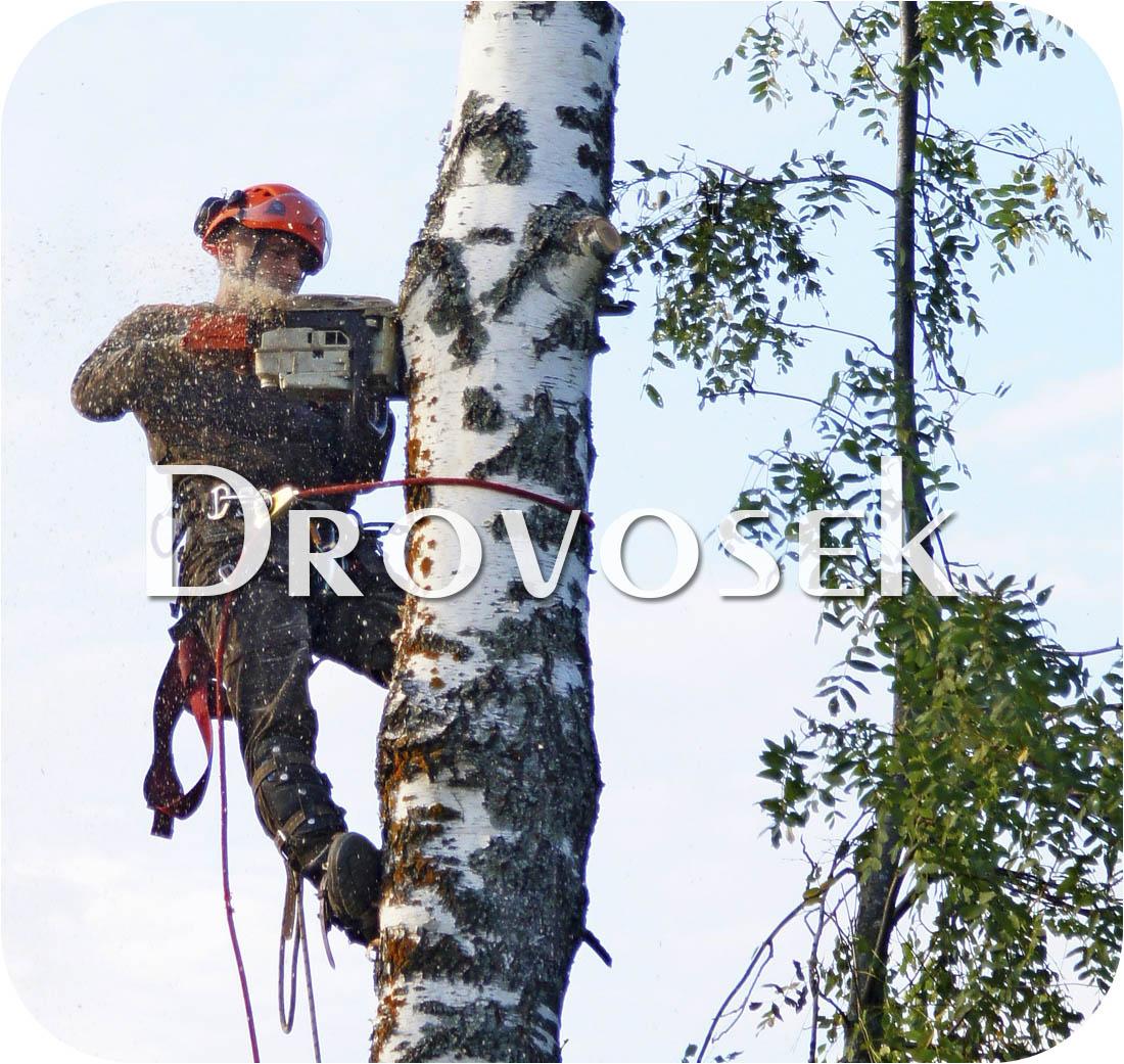 Спил деревьев в Сергиев Посаде