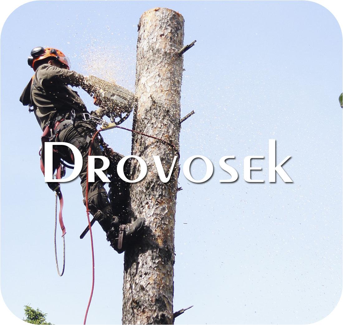 удалить дерево в Пушкино