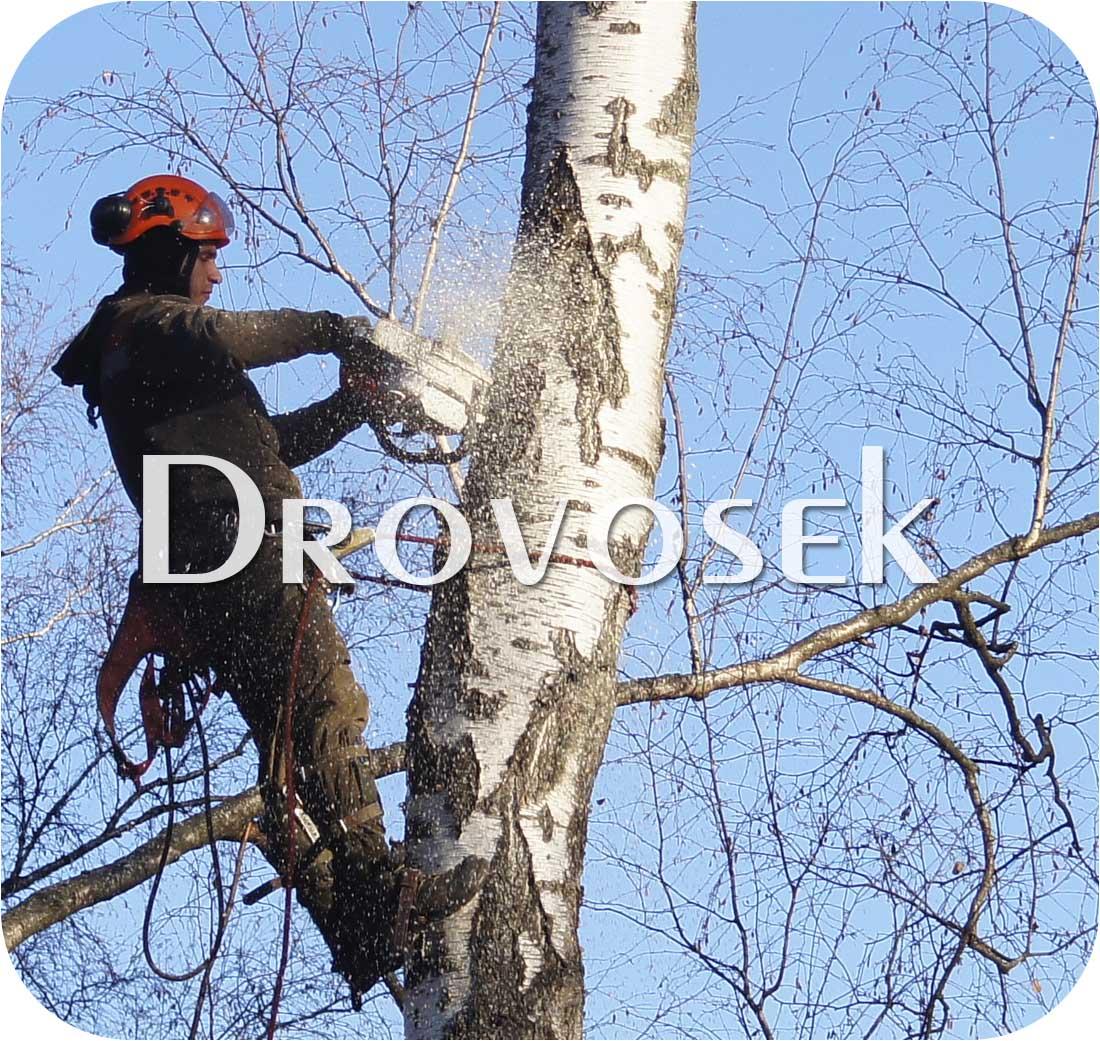 Спил деревьев в Чехове