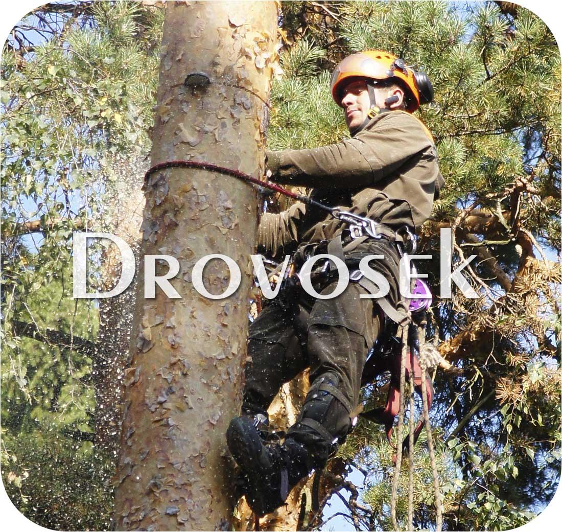 Удалить дерево в Истре