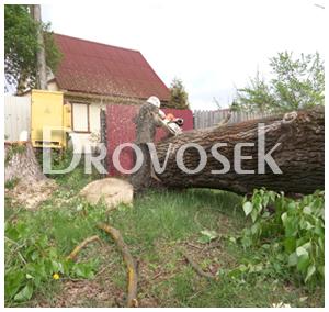 Спил деревьев в Красноармейске