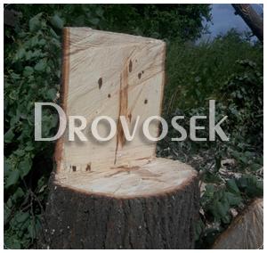 удаление деревьев в Ивантеевке