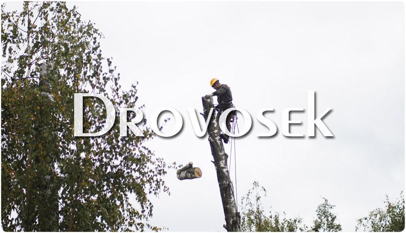 Вырубка деревьев по частям