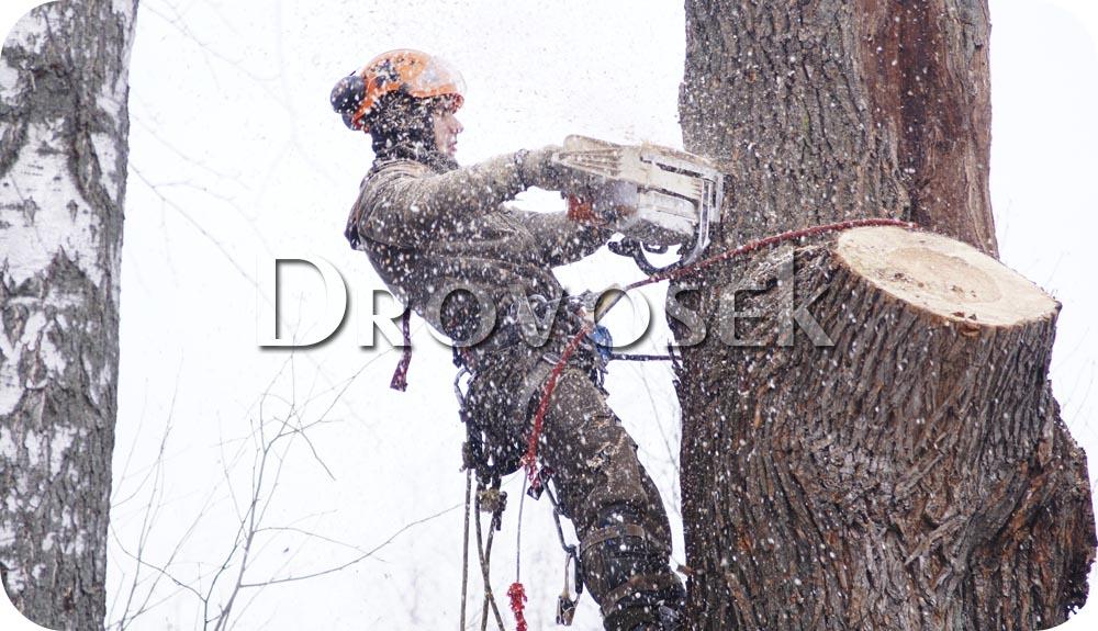 спилить старое дерево