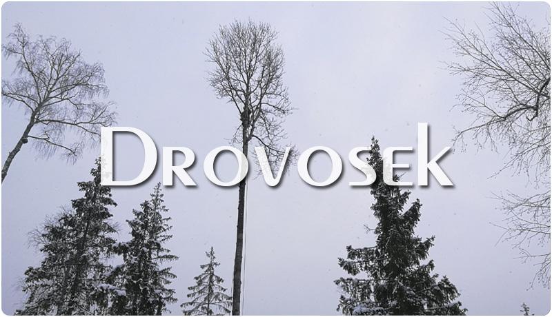 валка высоких деревьев