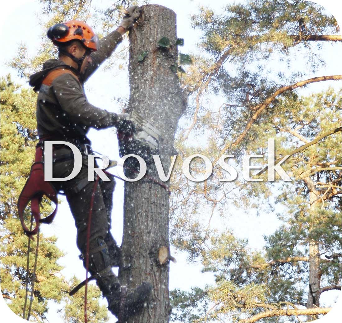 удаление деревьев в Воскресенске