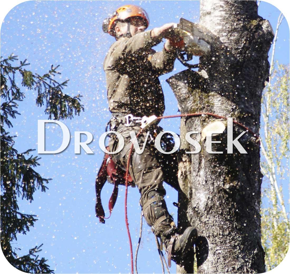 удаление деревьев в Орехово-Зуево