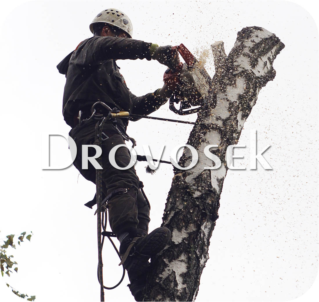 валка деревьев Шатура