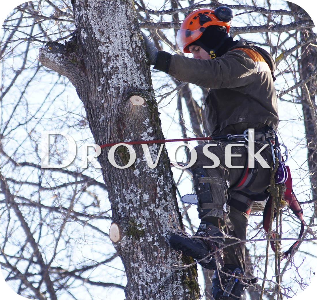 обрезка деревьев Луховицы
