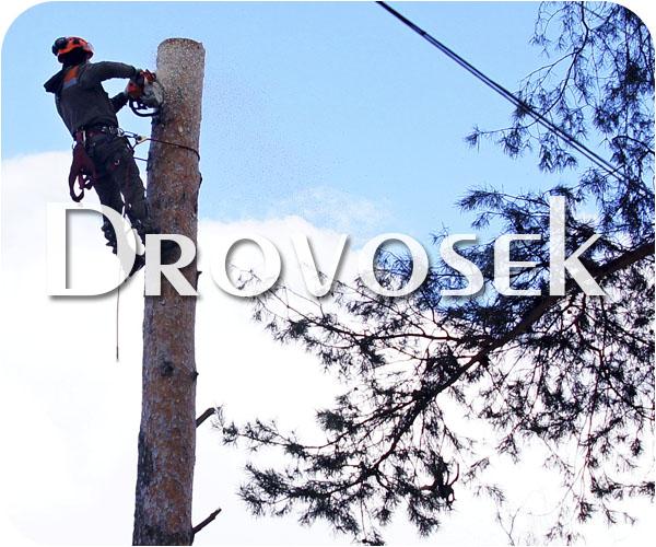 Рубка деревьев в Звенигороде