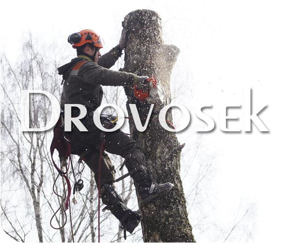 Удаление деревьев в Звенигороде