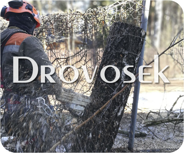 Удаление деревьев в Дубне