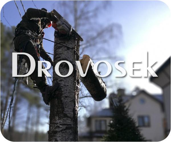 Вырубка деревьев в Электрогорске