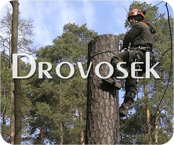 Спил деревьев в Электрогорске
