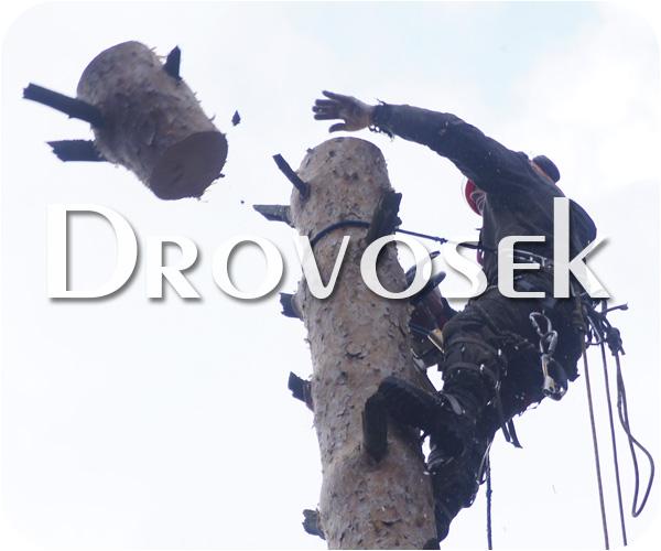 Спил деревьев в Фрязино