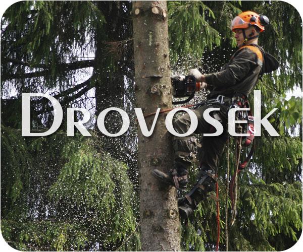 Вырубка деревьев в Голицыно