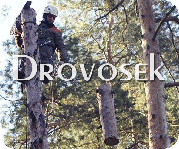 Удаление деревьев в Дедовске
