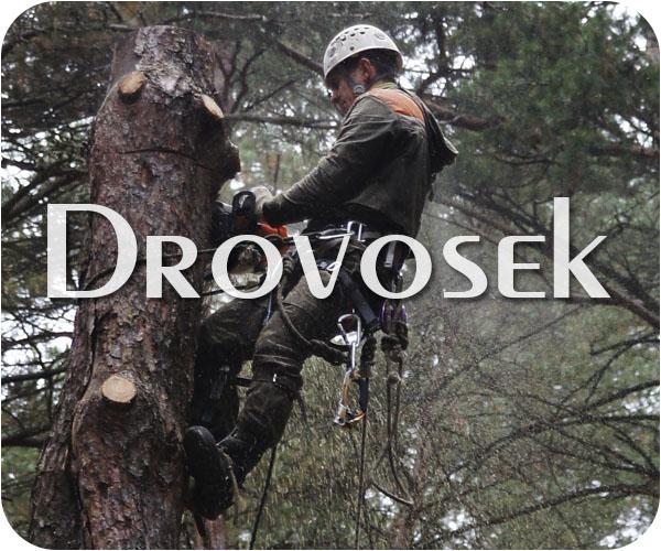 Валка деревьев в Дедовске
