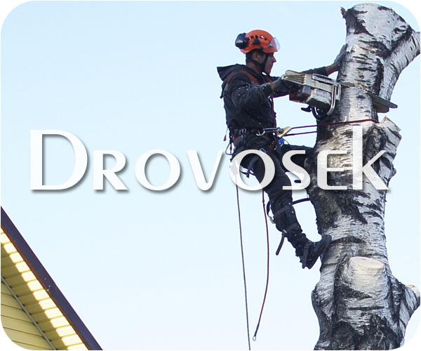 Вырубка деревьев в Монино