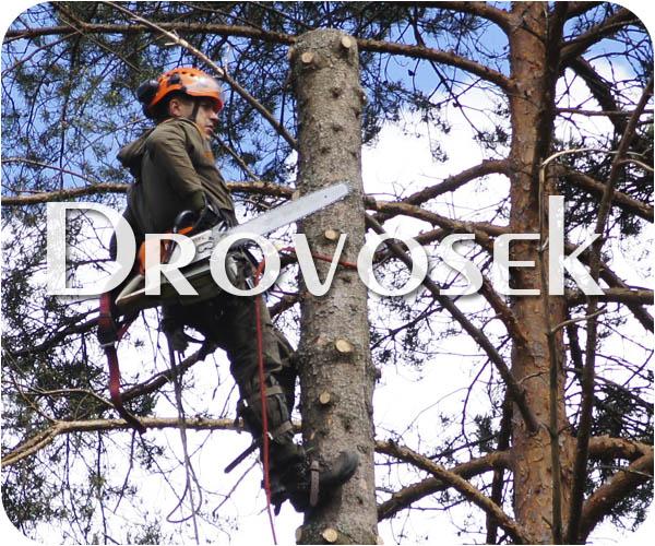 спил деревьев в Монино