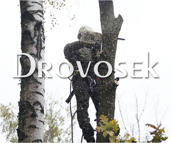 спил деревьев Жуковский