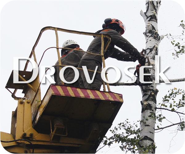 валка деревьев в Купавна