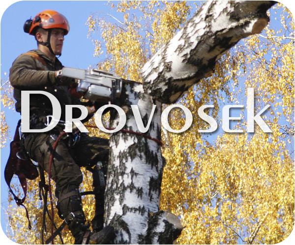вырубка деревьев в Щербинке