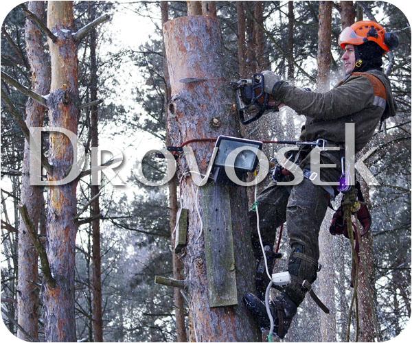 валка деревьев в Кратово