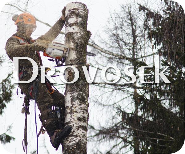 Валка деревьев в Малаховке