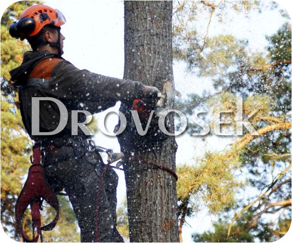 вырубка деревьев Софрино