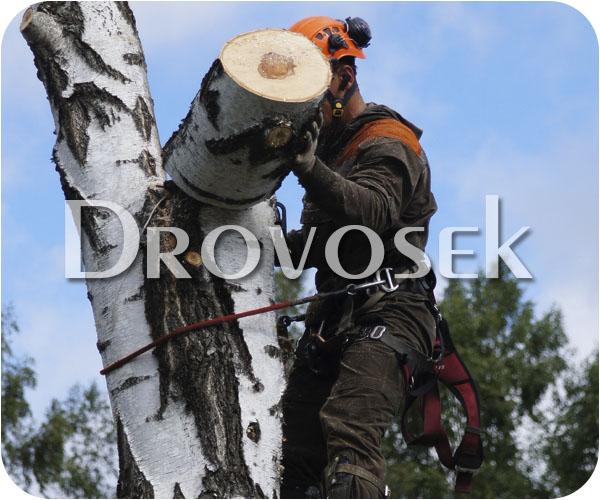 спил деревьев Софрино
