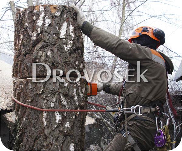 удаление деревьев Сходня