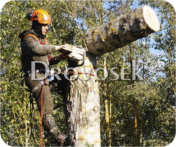 вырубка деревьев Сходня