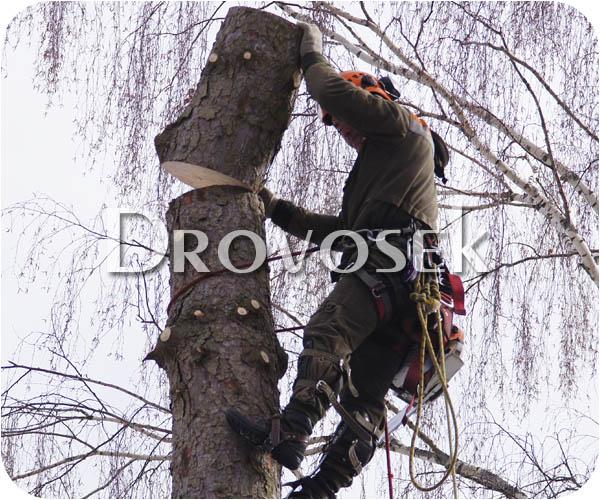спил деревьев Сходня