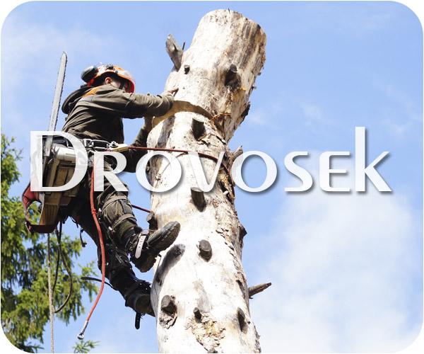Вырубка деревьев в Малаховке