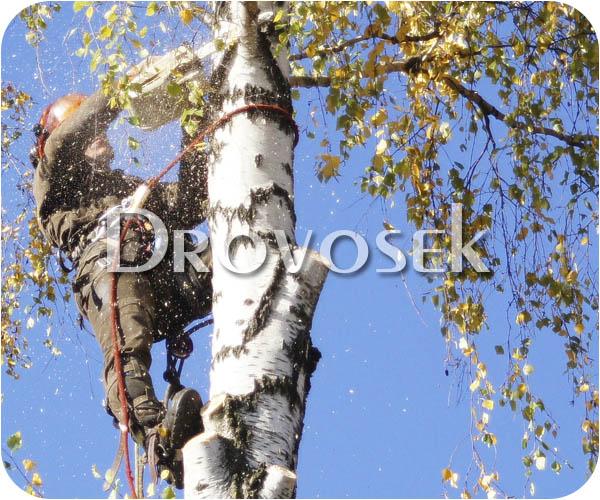 валка деревьев Тучково