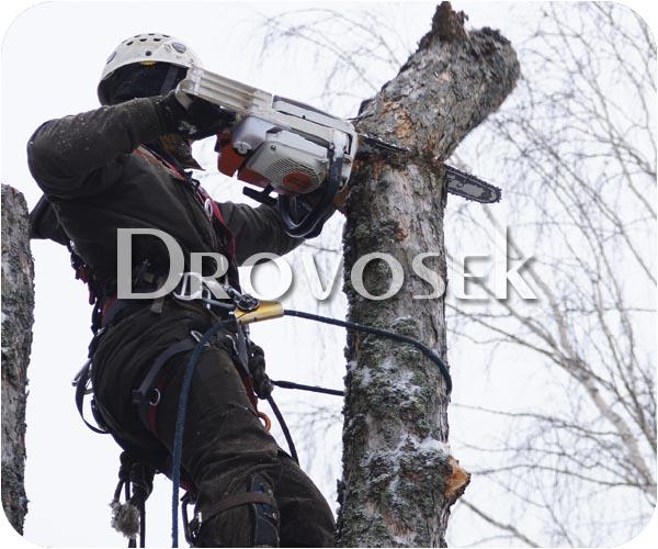 вырубка деревьев Лобня