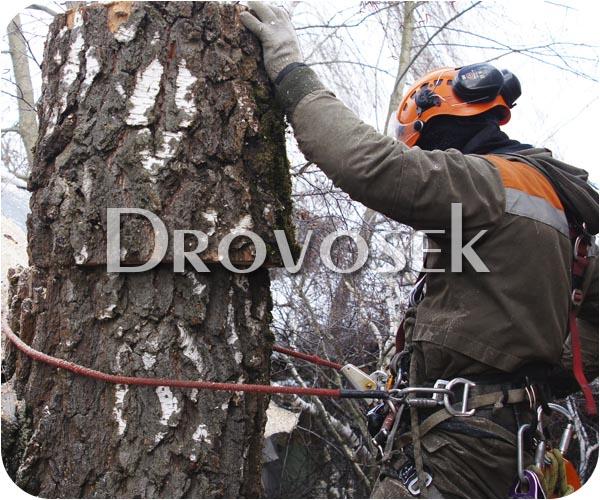 удаление деревьев Лобня