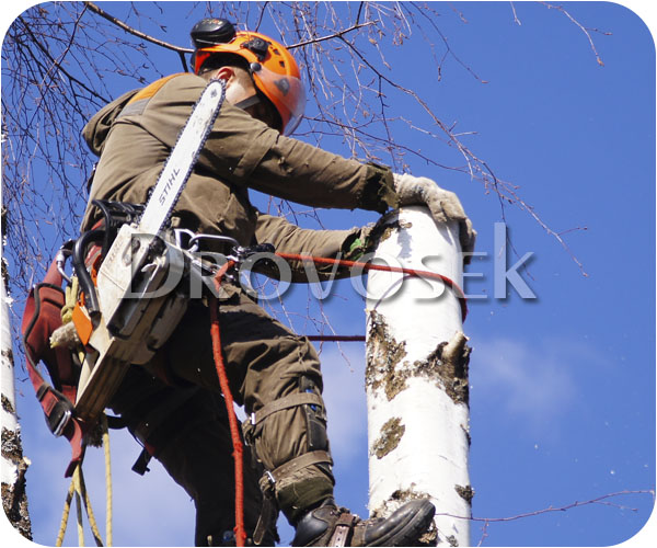вырубка дерева Селятино