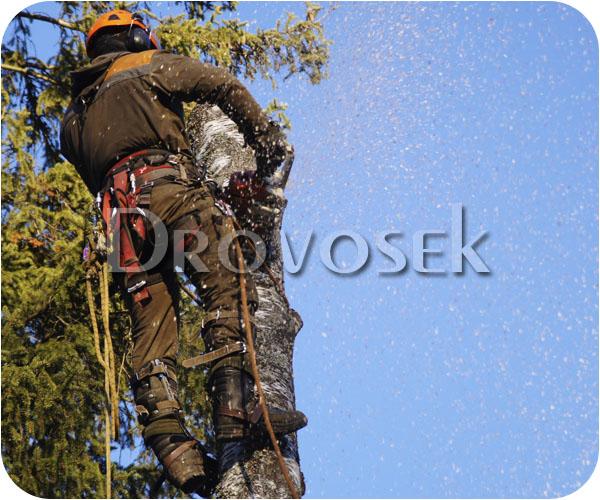валка деревьев Черноголовка