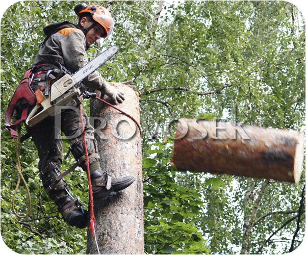 спилить дерево Черноголовка