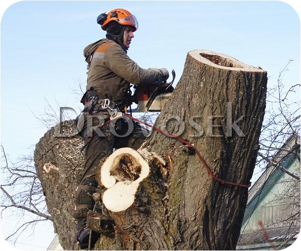 обрезать дерево Черноголовка