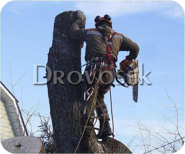 спил деревьев Красноармейск