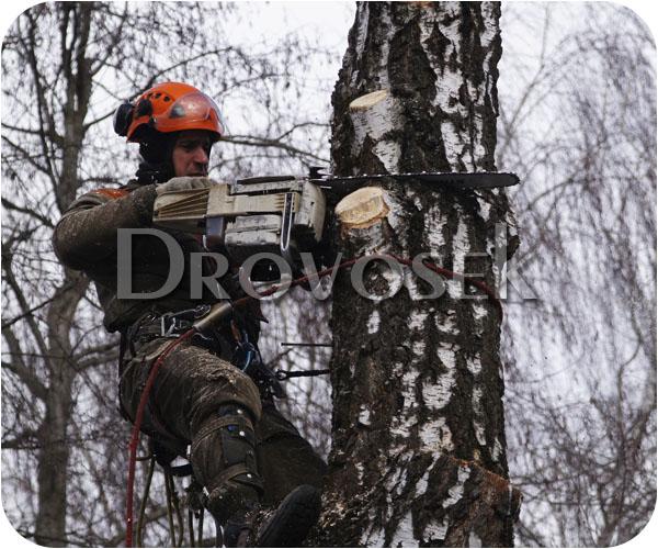 удалить дерево Красноармейск