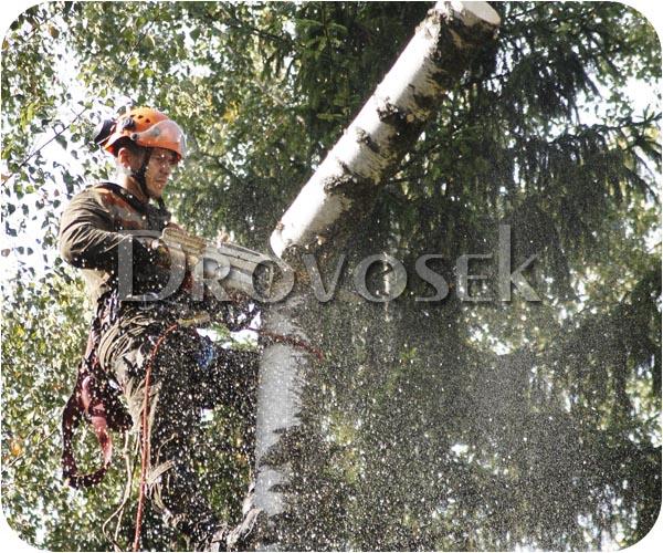 валка дерево Красноармейск