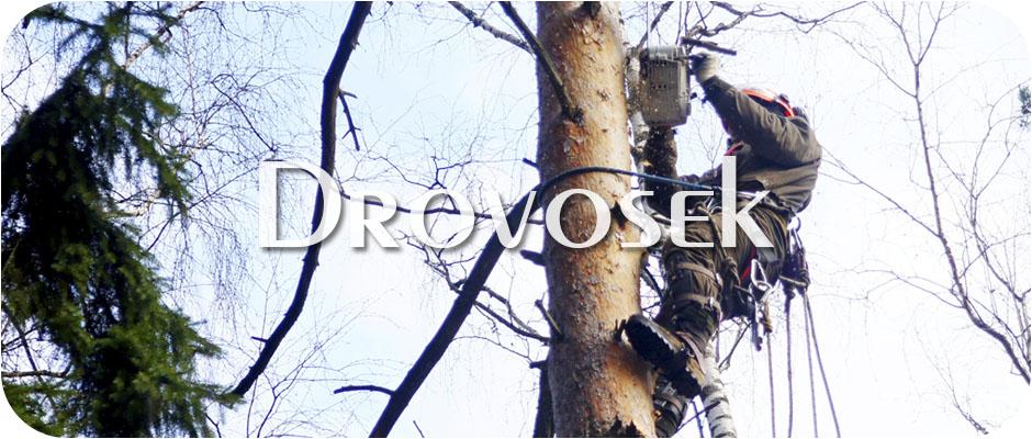 Спил деревьев в Звенигороде