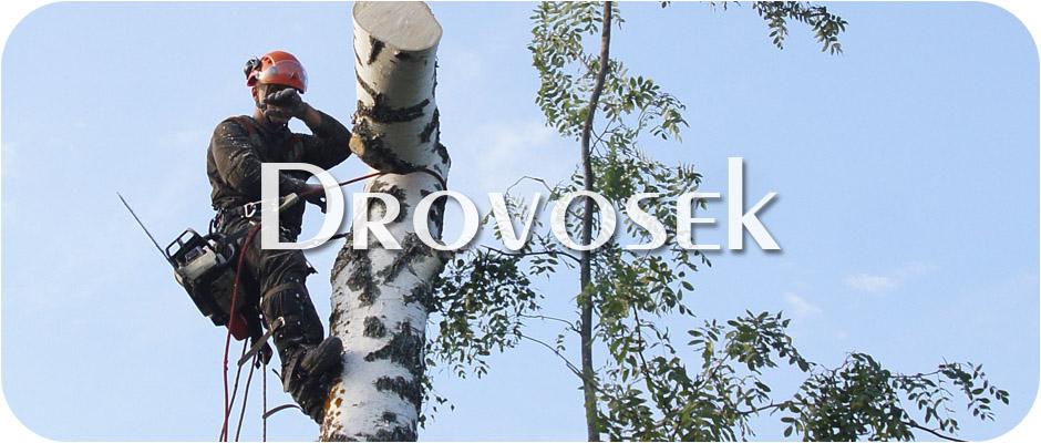 Спил деревьев во Фрязино